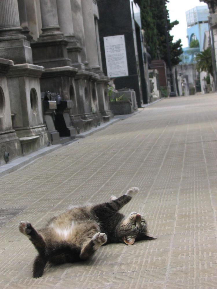 У кошки на животе складки у кошки
