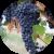 Виноградная косточка полезней мякоти