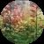 Аквасад или цветник в воде
