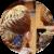 Прическа на основе колосков (плетения)