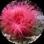Чем обрабатывать царапины от кораллов