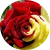 Азбука цветов: что означают цвета роз?