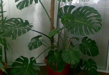 Неприхотливые растения в вашем доме