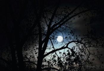 Лунный цикл и женщины