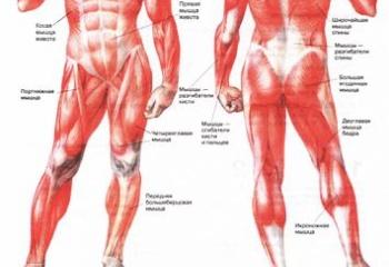 Как избавиться от боли в мышцах