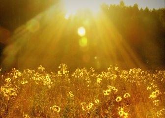 Недостаток солнечного света