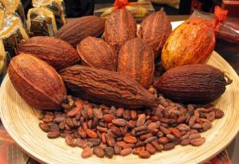 Польза и лечебные свойства какао