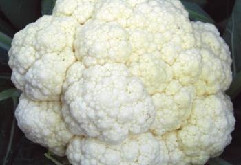 Цветная капуста: состав, полезные свойства,  калорийность
