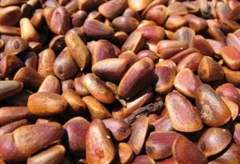 Кедровые орехи: состав, свойства и лечение
