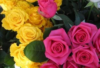 К чему дарят розы - значение белых, желтых, красных и других 22
