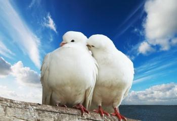 Любовные сценарии идеальных отношений