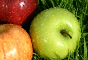 Плюсы и минусы яблочной диеты