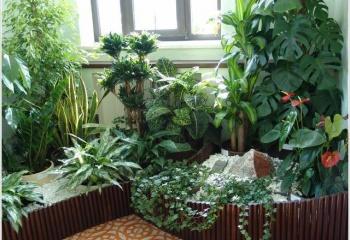 Какие растения можно держать дома