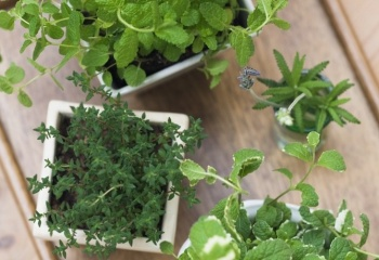 Аптека в доме: целебные свойства комнатных растений