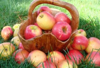 Яблочная диета: достоинства, недостатки, противопоказания