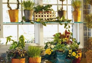 Домашний цветник: как вырастить сад на подоконнике