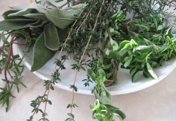 Травы, полезные для женского здоровья