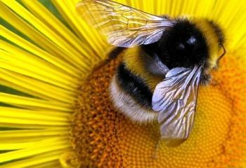 Как принимать цветочную пыльцу