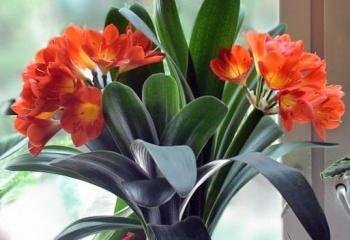 Влияние комнатных растений на здоровье