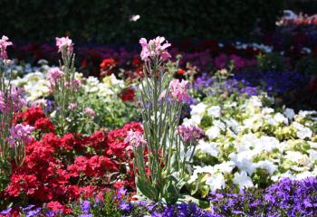 Как разместить цветы в саду фото