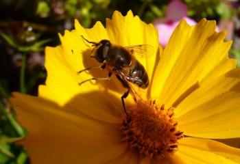 Пчелиный ядкак замена инъекциям ботокса