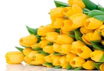 Желтые тюльпаны цветы