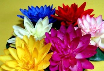 Цветок-брошь своими руками