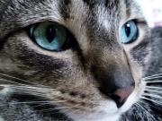 Фото:oboia.org.  В мае хозяин кота вернулся в свою коммунальную квартиру и обнаружил кота мертвым.